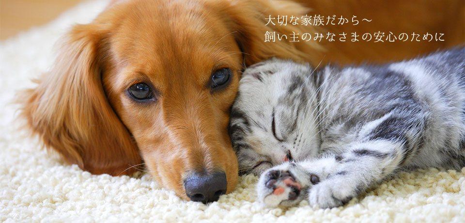 犬,猫ペット画像